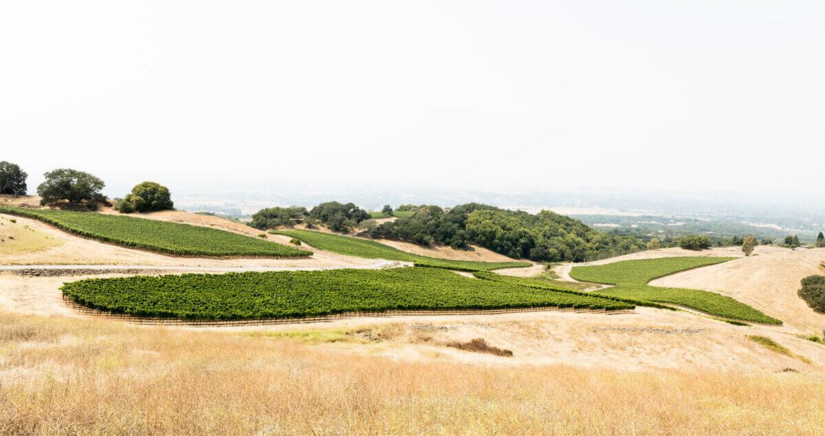 Cattleya Wines Vineyard